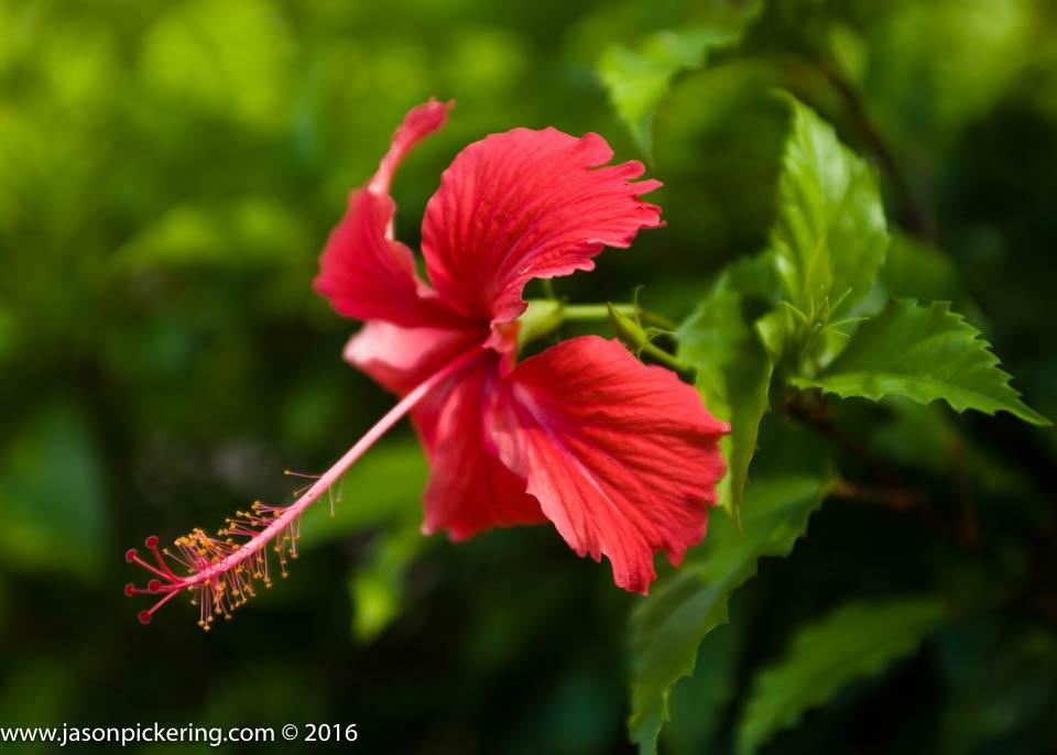 Nature Photography Caribbean Wildlife Fauna And Flora Antigua